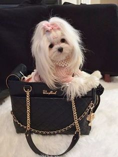 My future bestie/puppyYou can find Maltese and more on our website.My future bestie/puppy Cute Puppies, Cute Dogs, Dogs And Puppies, Animals And Pets, Baby Animals, Cute Animals, Baby Cats, Beautiful Dogs, Animals Beautiful