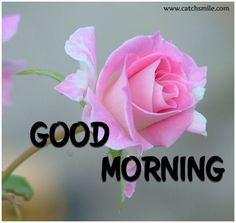 Good Morning - Good Morning-310 - -Quotes, Love Quotes, Famous Quotes, Love Images, Love Photos, Love Pictures and More on www.catchsmile.com