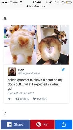 At least your dog looks happier than the other one. Crazy Funny Memes, Really Funny Memes, Stupid Memes, Funny Relatable Memes, Haha Funny, Funny Cute, Hilarious, Funny Animal Jokes, Cute Funny Animals