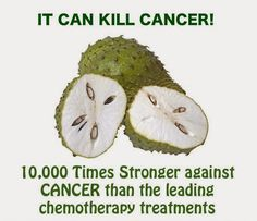 Soursop , also known as graviola, custard apple, cherimoya, guanabana, and Brazilian pawpaw is a fru...