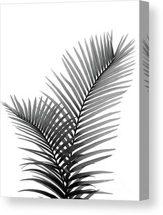 Intertwined Palm Leaves in Love Canvas Print / Canvas Art by Anitas and Bellas Art Owl Tattoo Wrist, Tropical Tattoo, Stencil Wall Art, Vine Tattoos, Palm Plant, Leaf Drawing, Canvas Art, Canvas Prints, Palmiers