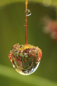 This is a very cool water drop or dew drop. The fact the background is blurred or out of focus makes it even more appealing.