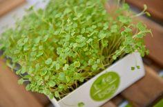 Microgreens Life in a bag