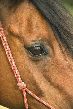 DIY Horse Halters