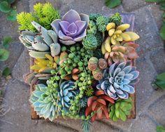 Succulent Gardening Ideas