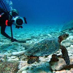 SDG filming the Cutest Sea Turtle off Cook Islands