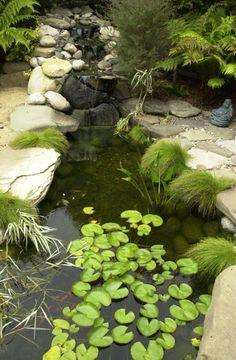 cool pond!