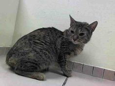 TO BE DESTROYED 5/2/14Brooklyn CenterMy name is SHELBY. My Animal ID # is A0997825. UPDATE: ***GONE BUT NOT FORGOTTEN***