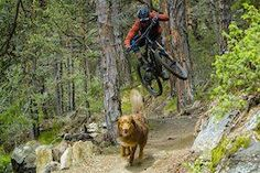 Video: Trail Dog Lovers Will Adore This Mtb Trails, Mountain Bike Trails, Pictures Of People, Cool Pictures, Dog Lovers, Things To Come, Around The Worlds, Dogs, Pet Dogs