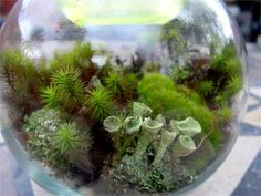 Terrarium Kit-Build Your own -Live moss & Lichens   Terrarium SUpplies