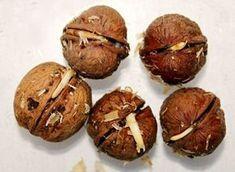 Пророщенные орехи называют уникальным средством омоложения. После проращивания они удваивают свою пользу.
