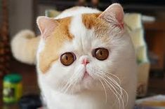 #catsmemes,funny animal pictures, cat memes, just like cat, funniest animals, cat fun, cat funny, cat, cats, cat cute, cat stuff,#funny, #funnyanimals, #funnycats