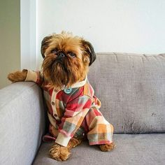 That doggie with pyjama is adorable! Animals And Pets, Baby Animals, Cute Animals, I Love Dogs, Cute Dogs, Pugs, Griffon Dog, Dogs And Puppies, Doggies