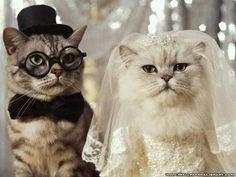 Nunta intre pisici - Cat wedding