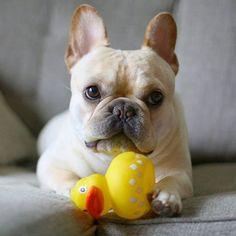 Umm..I asked for duck confit.. 😒🐥 #easternotgoingsowell #strikingout #easter2elvis0 #grumpybunny