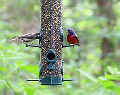 Garden Song® Classic Bird Feeder
