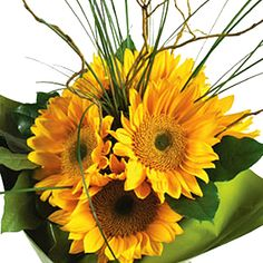 The bright, lemon yellow Sunbeam Sunflowers are the main luminosity of the bouquet, showing off against its adjacent green foliage below, along with Lemon Leaves, to create a much fuller bouquet. Sunflower Table Centerpieces, Sunflower Arrangements, Wedding Arrangements, Wedding Table Centerpieces, Yellow Centerpieces, Fall Wedding Flowers, Fall Flowers, Fresh Flowers, Circle Table