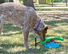 Toys'R'Us Treatter Totter dog toy