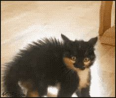 Back up, son! | 27 Cats That Just Can't Handle It
