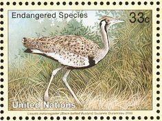 Black-bellied Bustard stamps - mainly images - gallery format