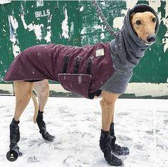 WHIPPET Winter Dog Coat Winter Coat for Dogs Waterproof Dog