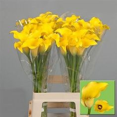 Calla Lily Golden Nugget is a Yellow Arum type lily. It is approx. popular for contemporary floristry and wedding flowers. Elegant Flowers, May Flowers, Amazing Flowers, Yellow Flowers, Trumpet Lily, Zantedeschia, Golden Nugget, Florist Supplies, Flowers Delivered