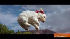 Image result for dogs flying