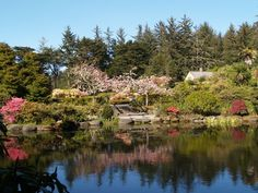 Shore Acres State Park, Coos Bay: See 626 reviews, articles, and 404 photos of Shore Acres State Park, ranked No.1 on TripAdvisor among 19 attractions in Coos Bay.