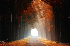Dreaming of Autumn by LVDG Photography Art on 500px