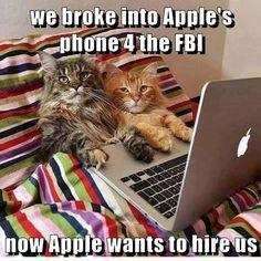 Hacker Cats