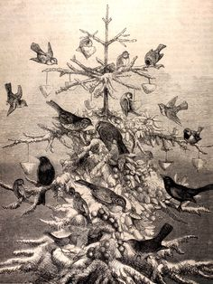 Old Books & Things....The Birds' Christmas Tree, 19th century illustration