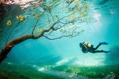 "Third place – ""Diver in Magic Kingdom"", Grüner See, Tragöß, Austria, by Marc Henauer"