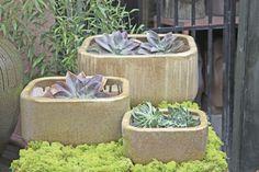 I love the look of succulents in earthy containers