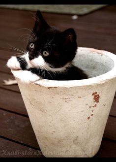 I grew a cat for you by xXAli-StarXx on deviantART