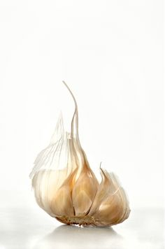 Fantastic Food Photography by Sue Tallon