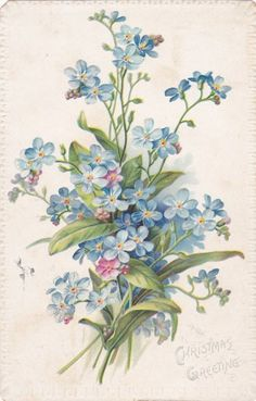 A very pretty painting of Forget-Me-Nots used on a vintage Christmas card.