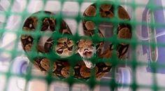 """""""O GRITO DO BICHO"""": Colômbia liberta animais selvagens #ogritodobicho#falabicho"""