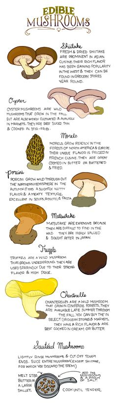 Survival tip know how to identify these edible plants to ensure safety. Discovering the value of edible plants for nutrition is also a good idea. Edible Mushrooms, Stuffed Mushrooms, Cook Mushrooms, Poisonous Mushrooms, How To Draw Mushrooms, Growing Mushrooms At Home, Garden Mushrooms, Poisonous Plants, Edible Wild Plants
