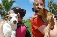 Dead Dog Beach, Puerto Rico.
