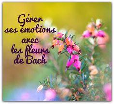 Gérer ses émotions avec les fleurs de Bach - Le site de Maître Zen