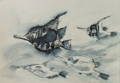 Love this pen drawing of fish - Wynand Smit Snr Artist / Architect