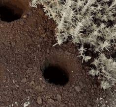 Gartenpflanzen Spiral-Bohrer – Tiraloshop Weeding Tools, Plantation, 8 Bit, Garden, Growing Weed, Bulbs, Landscape Planner, Outdoor Spaces, Useful Tips