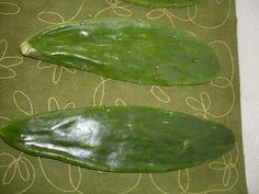 Tortoise Food Cactus Pad Plants 3 lbs for Grassland or by artVine