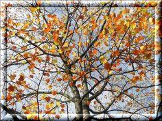 Herbst Gruss 3kkk@s