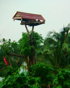 Dovecote / Pigeonhouse ... House of pigeon. Traditional design, in East Java village. #dovecote #pigeonhouse #taubenhaus