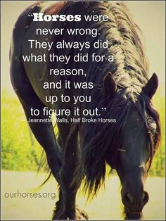 """""""Horses were never wrong. They always did what they did for a reason, and it was up to you to figure it out."""" #horsequotes"""