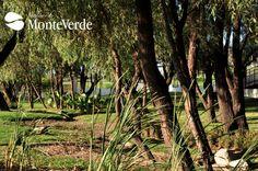 Amenidades Senderos de Monteverde Residencial GIG Guadalajara
