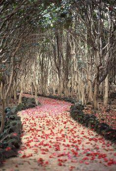 Flowered Petals Path, Hagi  #Yamaguchi  #apan