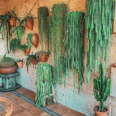 Photo shared by 🌿Jungalow® on April 2020 tagging Image may contain: plant and indoor via House Plants Decor, Plant Decor, Tropical Plants, Cactus Plants, Mug Design, Plants Are Friends, Inspiration Design, Bedroom Plants, Kew Gardens