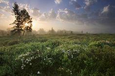 Delightful Meadow at Dawn